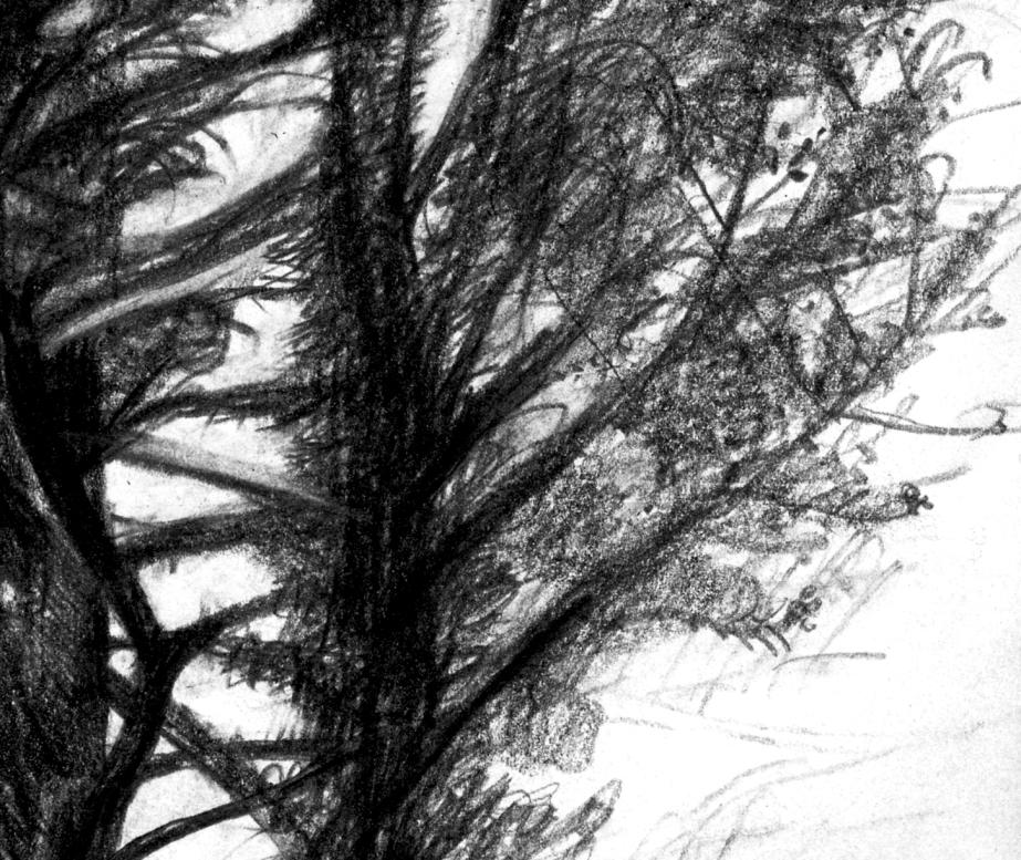 treestwodetail